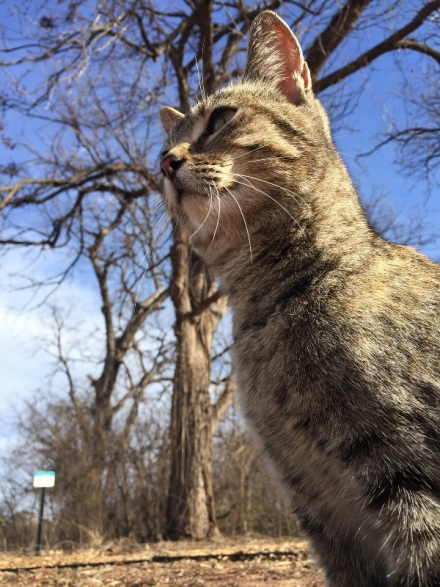 Researchers from Oklahoma State University's Department of Natural Resources Ecology and Management and the Smithsonian Migratory Bird Center recently came together to study how cats are impacting mainland wildlife populations.